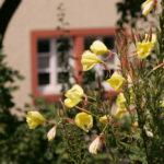 mayischhof_092